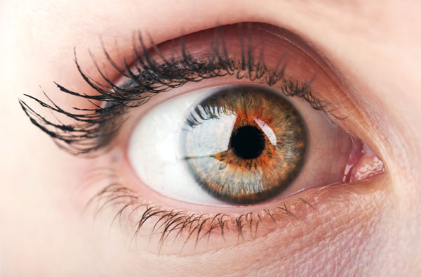Study Finds Donor Corneas Can Be Preserved For Long